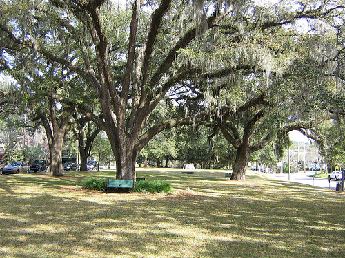 a section of the downtown park.