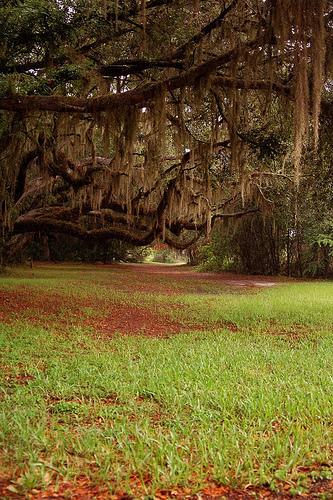 Shady Oak Path