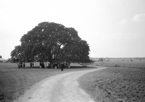 wedding under the oak
