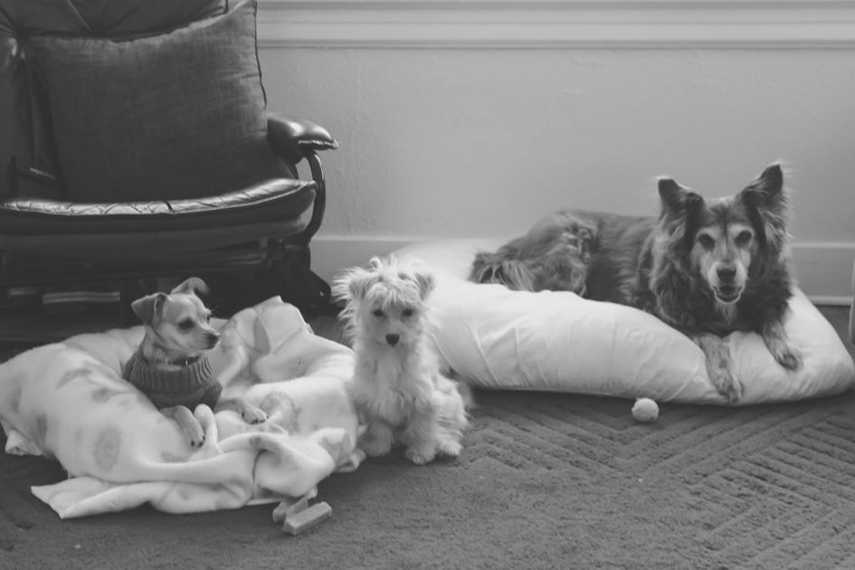 Dog-Photographer-Asheville-8155